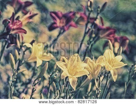 Garden Lilies - Retro Filtered