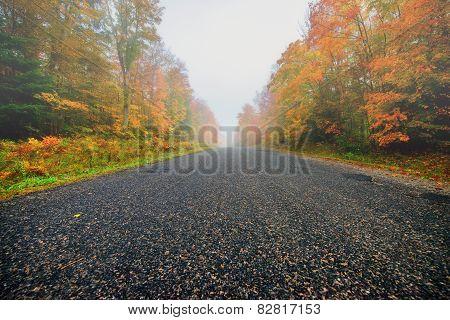 Misty Rural Road Through Autumn Trees