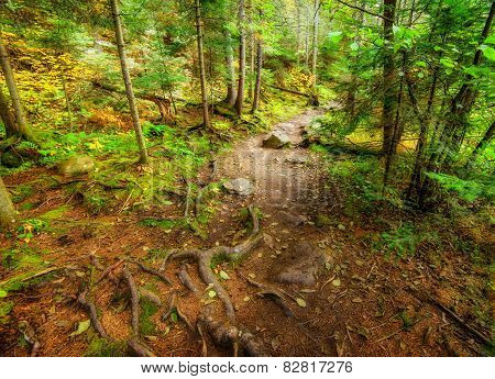 Rooted And Rocky Forest Path
