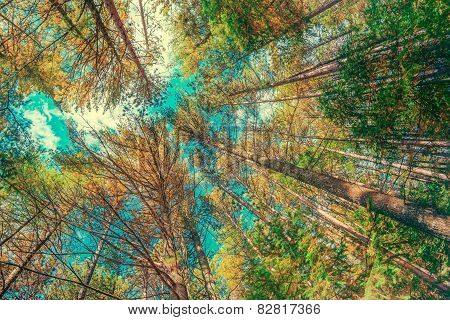 Looking Up At Trees In Wide Angle - Vintage, Faded