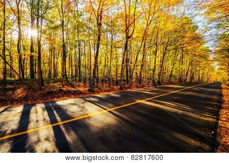 By The Colorful Treed Autumn Road