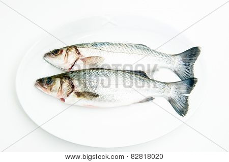 Couple Of Fresh Raw Seabass Fish On White Plate