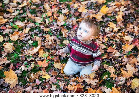 Boy Sitting On Leaf Covered Ground Looking Up