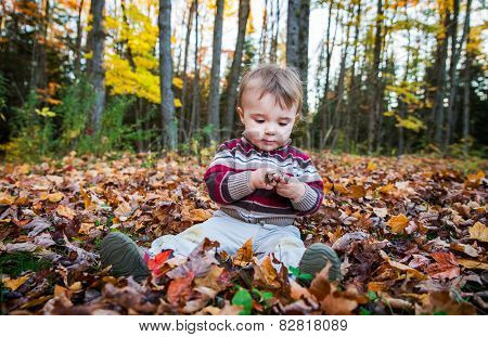 Boy Sits Inspecting A Maple Leaf