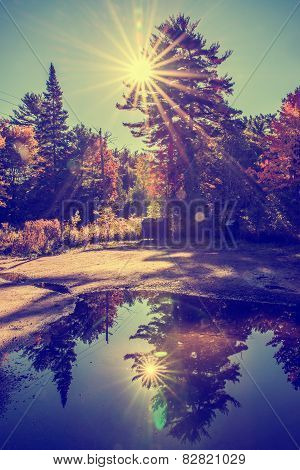Reflection Of Sun Beams Behind The Trees - Retro