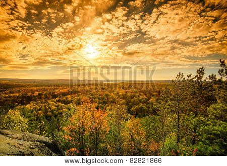 Sunlight Over The Treetops In An Autumn Forest - Golden