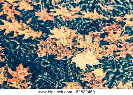 Raining On Floating Fall Leaves In A Puddle - Vintage