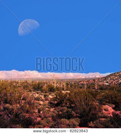 Moon Sonora Deasrt