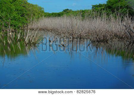 Mangrove Lake