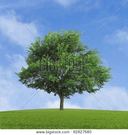 Lonely Growing Tree
