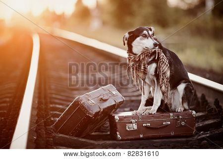 Mongrel On Rails With Suitcases.