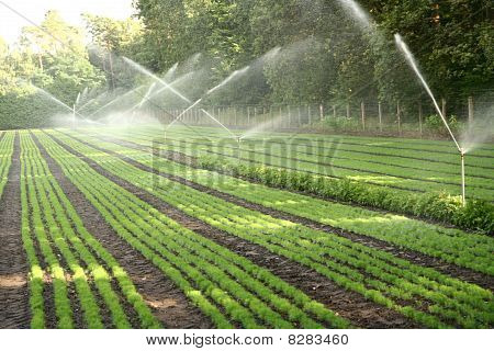 Watering of a nursery plantation