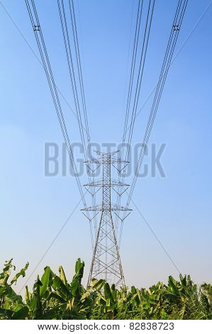 Large power pole over banana farm