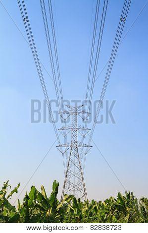 Large power pole over banana farm