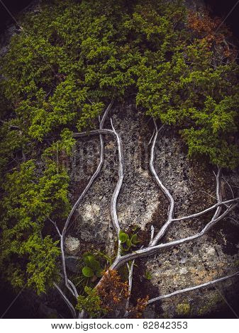 Branches of bush in the Karakolsky lakes area. Altai Republic, Russia