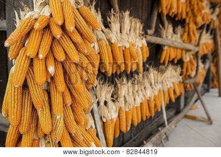 dried corn hung up outside rural house in Thailand