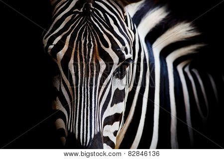 A Headshot Of A Zebra