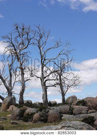 An Australian phantasm landscape