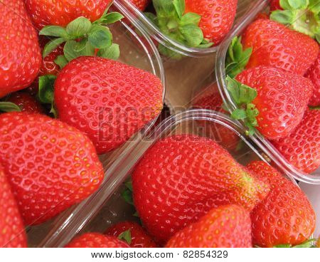 Fresh strawberry fruits in summer