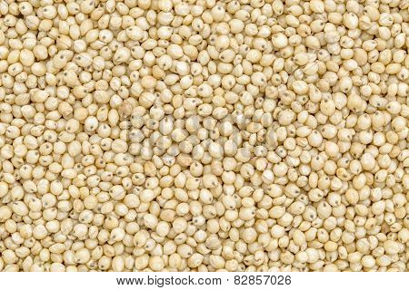 background and texture of gluten free sorghum grain