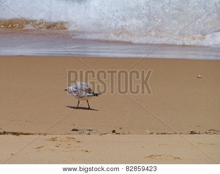 A gull at the waterfront of the ocean