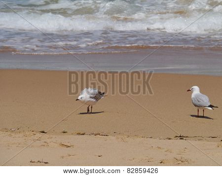 Two gulls at the waterfront of the ocean