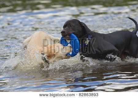 Black And White Dog Are Playing In The Water.