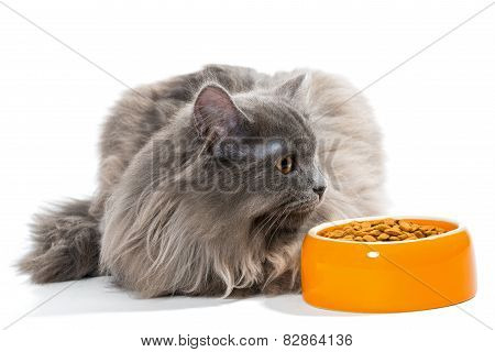 Persian Cat Sitting Near The Bowl Of Dry Food