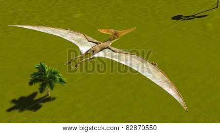Flying pterodactyl over the land