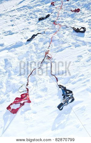 Harness For Racing Sled Dogs