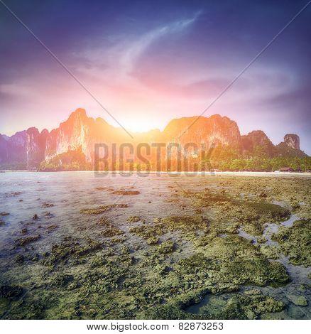 morning in Maya bay Phi phi leh island Thailand. Perfect resort background
