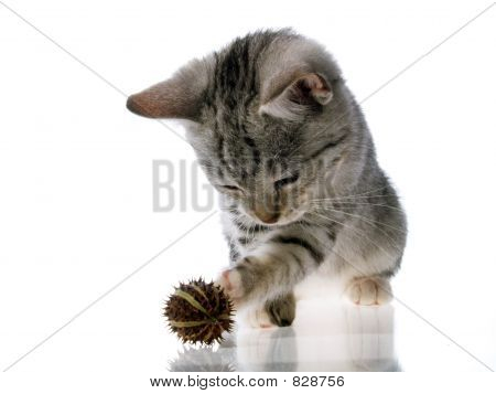 Pussy kitten