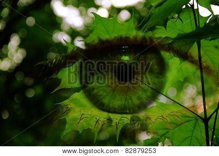 Eyes On The Maple Leaf