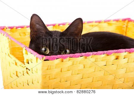 Keen yellow eyes of a black cat curiously peeking over the edge of a yellow basket at the viewer
