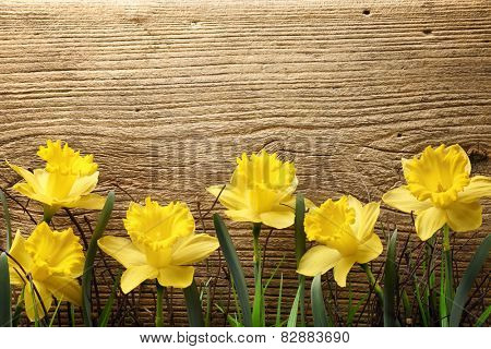 Yellow daffodils on brown wooden board.