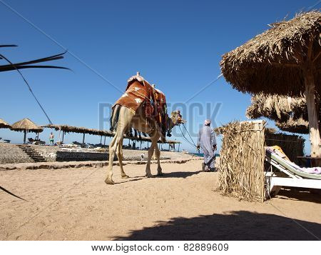 Arab man with a camel on the beach