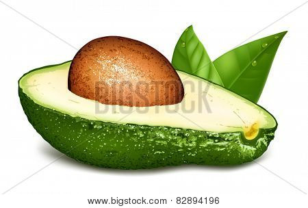 Avocado with core and leaves. Vector illustration
