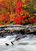 foto of driftwood  - A pile of driftwood lies by a rushing rocky stream in a colorful forest during the autumn season - JPG