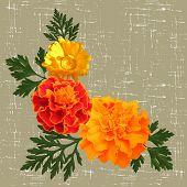 image of marigold  - decorative background with calendula and marigolds - JPG