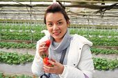 picture of overcoats  - Asian beautiful tourist woman wearing overcoat in strawberry greenhouse harvest fresh red - JPG