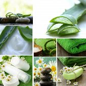 stock photo of aloe-vera  - collage of spa concept  - JPG