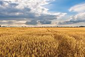 image of horizon  - Cultivated land with cloudy sky and horizon - JPG