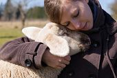stock photo of spring lambs  - pretty woman is hugging intimately a little lamb - JPG