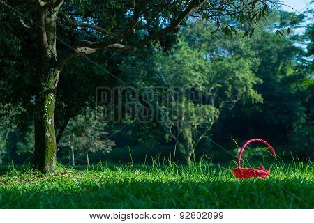 Red Basket In Grasses Under Tree