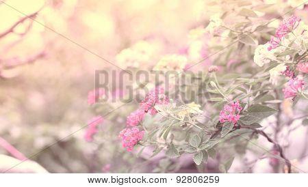 Beautiful  Flower Nature Background