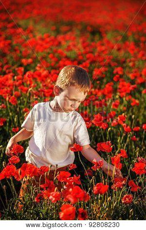Cute Little Boy With Poppy Flower On Poppy Field On Hot Summer Evening