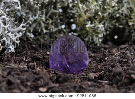 Amethyst On Forest Floor