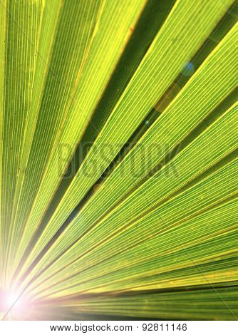 Palm tree leaf.