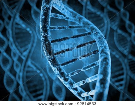 DNA Molecules