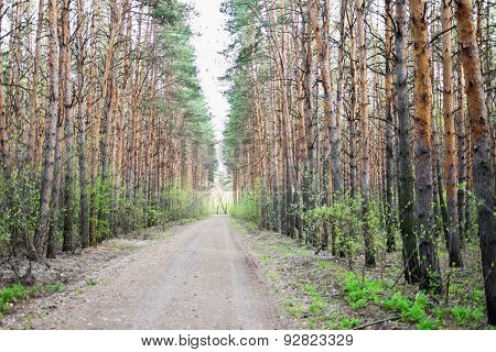 Road In Forest
